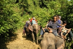 Hitch a Ride on an Elephant