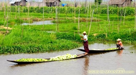Floating Garden in Inle Lake