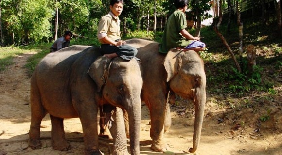 Elephant Trekking in Putao